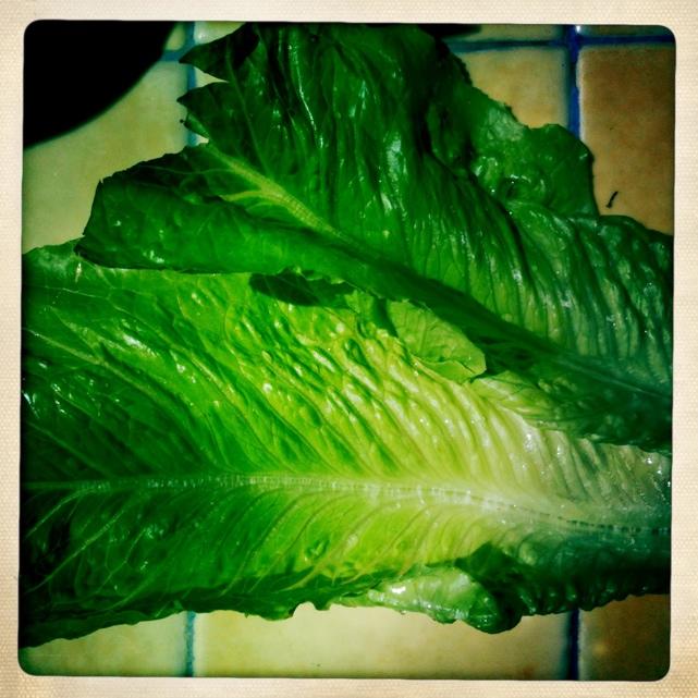 insalata con lumaca.jpg